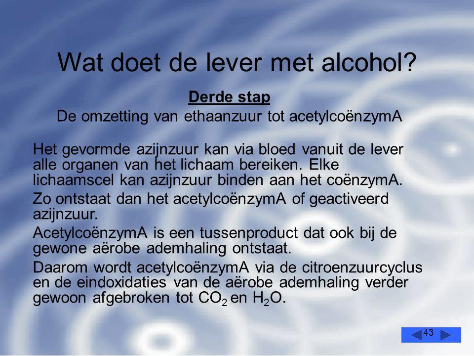 43 Wat doet de lever met alcohol.