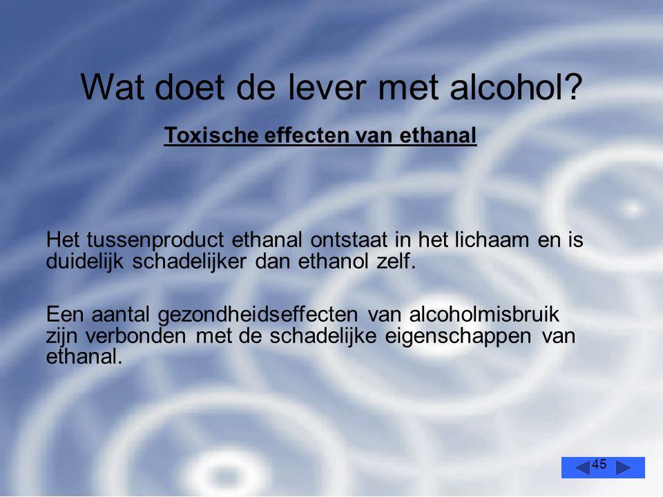 45 Wat doet de lever met alcohol.