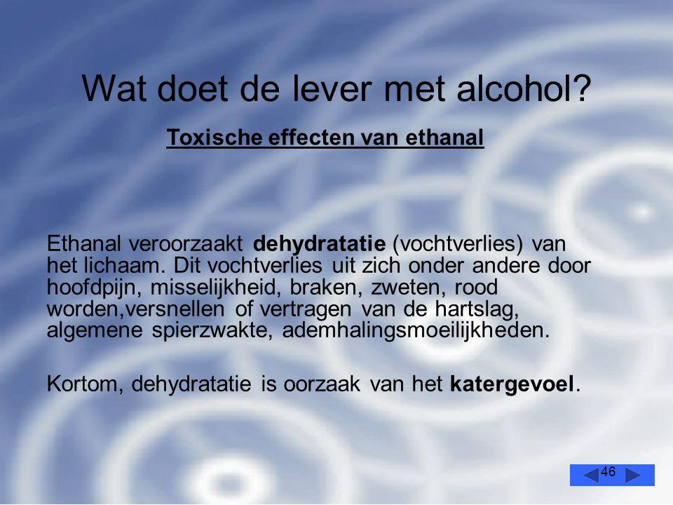 46 Wat doet de lever met alcohol.
