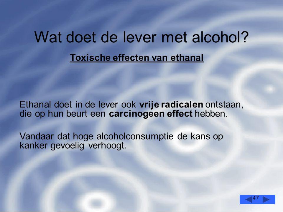 47 Wat doet de lever met alcohol.