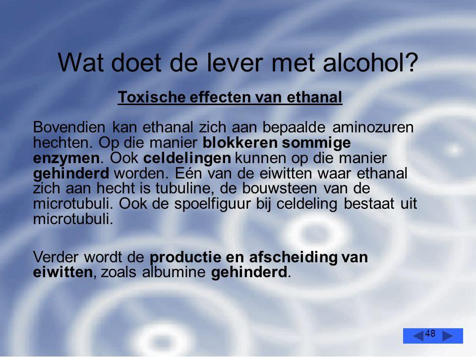 48 Wat doet de lever met alcohol.
