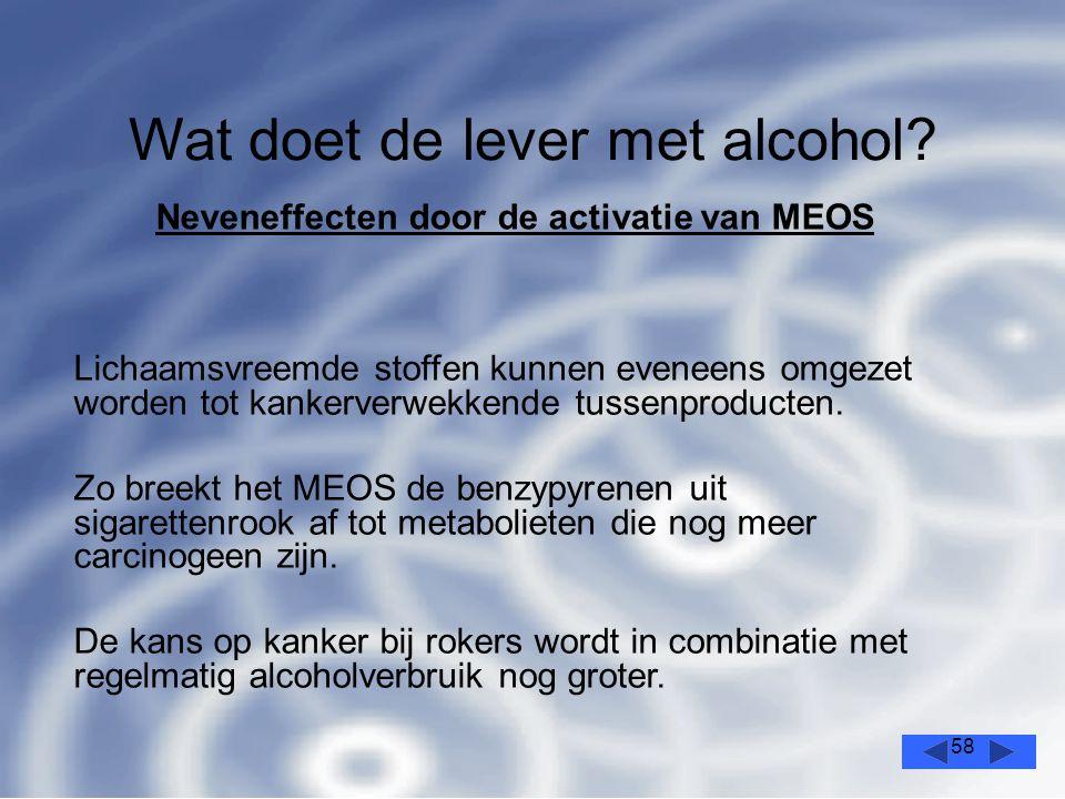58 Wat doet de lever met alcohol.