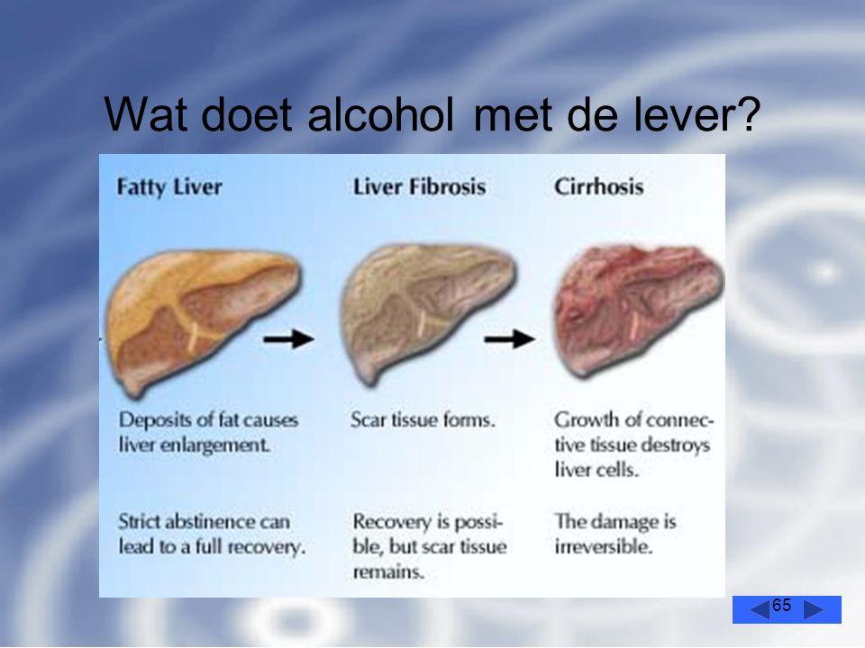 65 Wat doet alcohol met de lever?