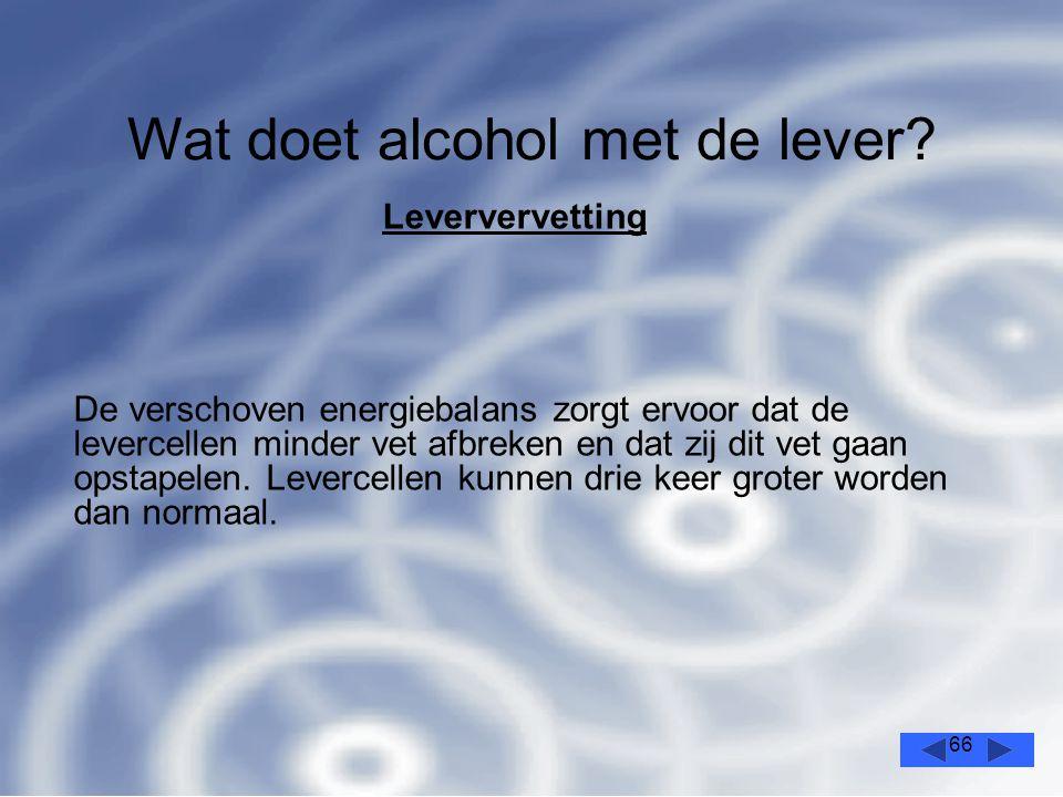 66 Wat doet alcohol met de lever.