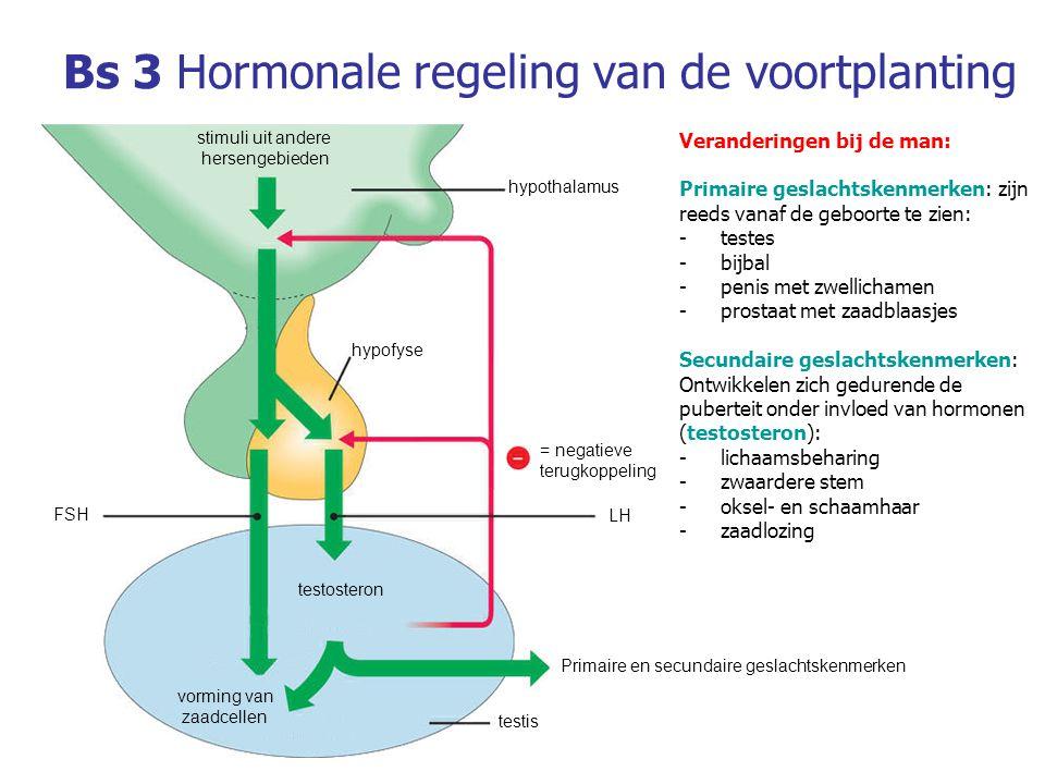 Bs 3Hormonale regeling van de voortplanting Veranderingen bij de man: Primaire geslachtskenmerken: zijn reeds vanaf de geboorte te zien: -testes -bijbal -penis met zwellichamen -prostaat met zaadblaasjes Secundaire geslachtskenmerken: Ontwikkelen zich gedurende de puberteit onder invloed van hormonen (testosteron): -lichaamsbeharing -zwaardere stem -oksel- en schaamhaar -zaadlozing hypothalamus Primaire en secundaire geslachtskenmerken FSH LH vorming van zaadcellen testosteron testis hypofyse stimuli uit andere hersengebieden = negatieve terugkoppeling