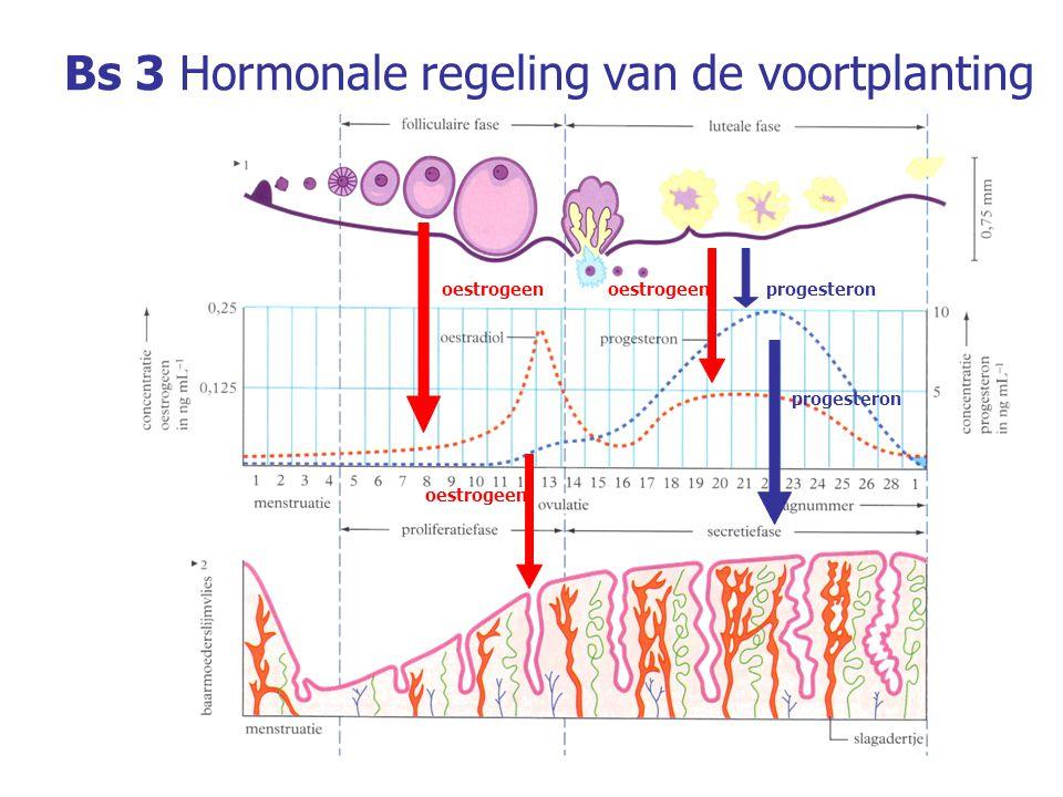 Bs 3Hormonale regeling van de voortplanting De pijlen in onderstaande afbeelding geven een stimulerende of remmende invloed weer.