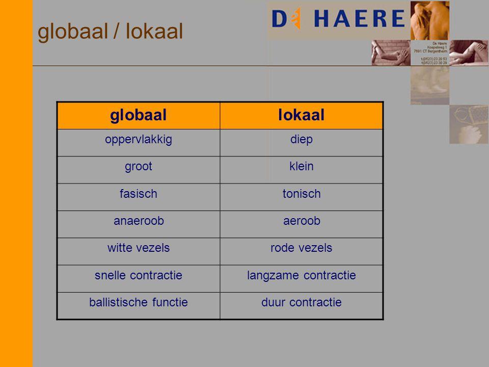globaal / lokaal globaallokaal oppervlakkigdiep grootklein fasischtonisch anaeroobaeroob witte vezelsrode vezels snelle contractielangzame contractie