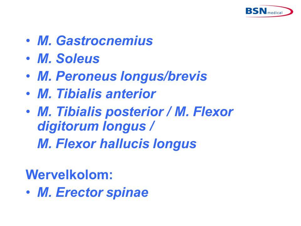 •M. Gastrocnemius •M. Soleus •M. Peroneus longus/brevis •M. Tibialis anterior •M. Tibialis posterior / M. Flexor digitorum longus / M. Flexor hallucis
