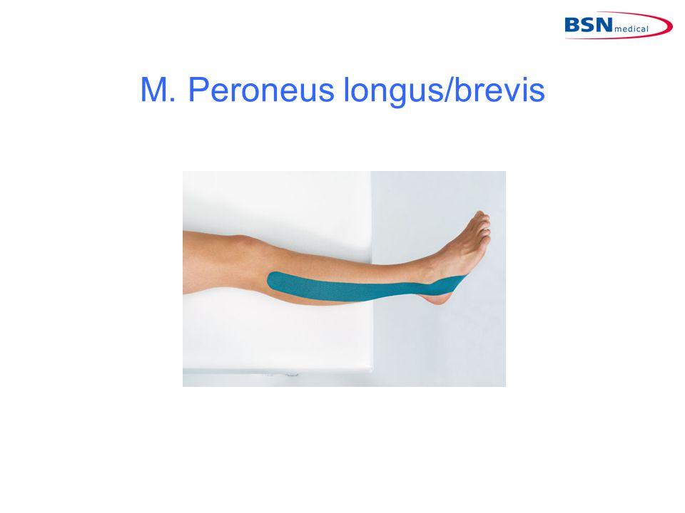M. Peroneus longus/brevis