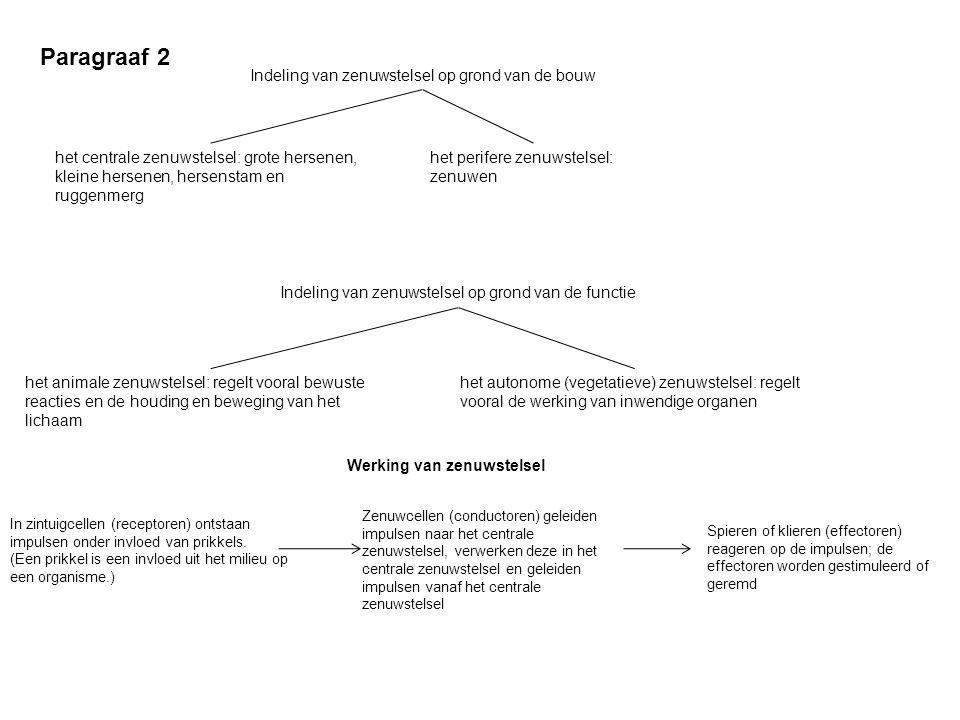 Paragraaf 2 Indeling van zenuwstelsel op grond van de bouw het centrale zenuwstelsel: grote hersenen, kleine hersenen, hersenstam en ruggenmerg het pe