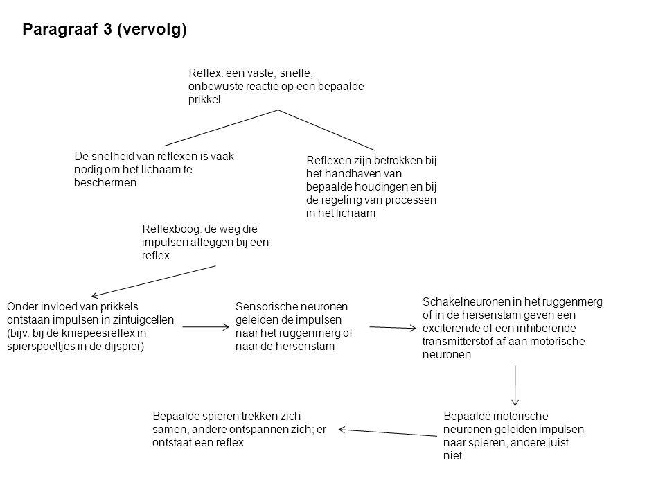 Paragraaf 4 Bouw van autonome zenuwstelsel Het orthosympathische deel.
