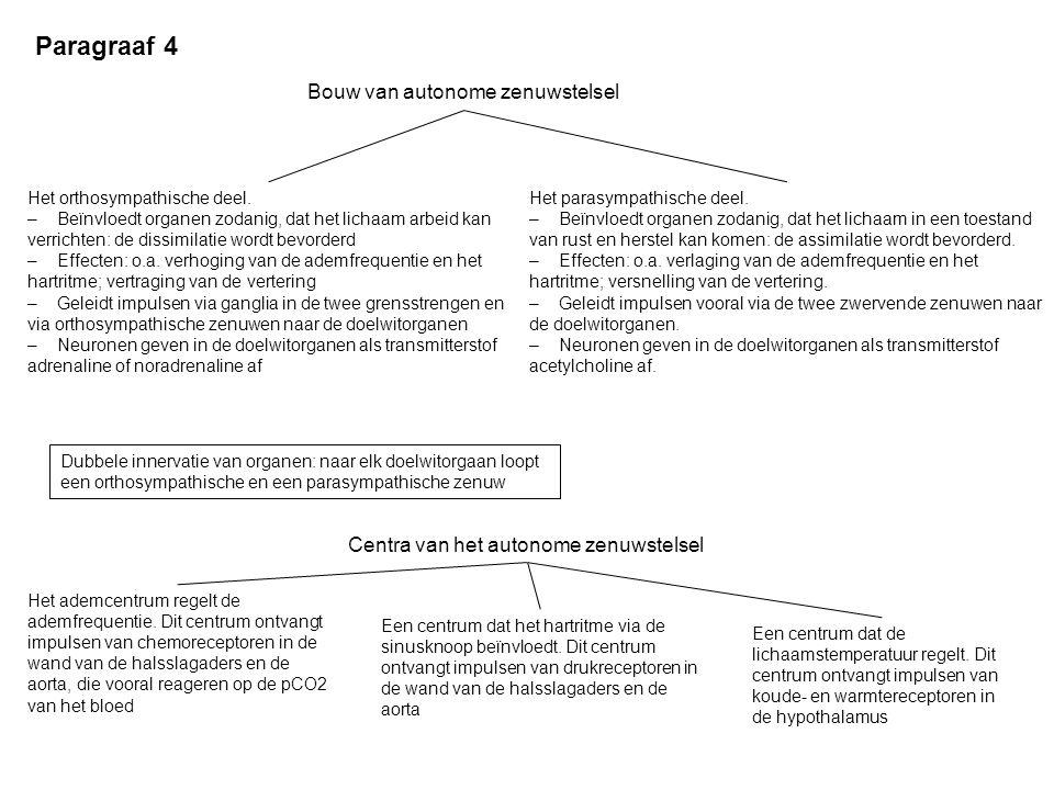 Paragraaf 4 Bouw van autonome zenuwstelsel Het orthosympathische deel. – Beïnvloedt organen zodanig, dat het lichaam arbeid kan verrichten: de dissimi