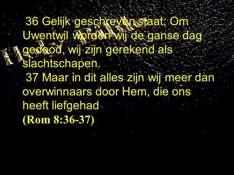 36 Gelijk geschreven staat: Om Uwentwil worden wij de ganse dag gedood, wij zijn gerekend als slachtschapen. 37 Maar in dit alles zijn wij meer dan ov