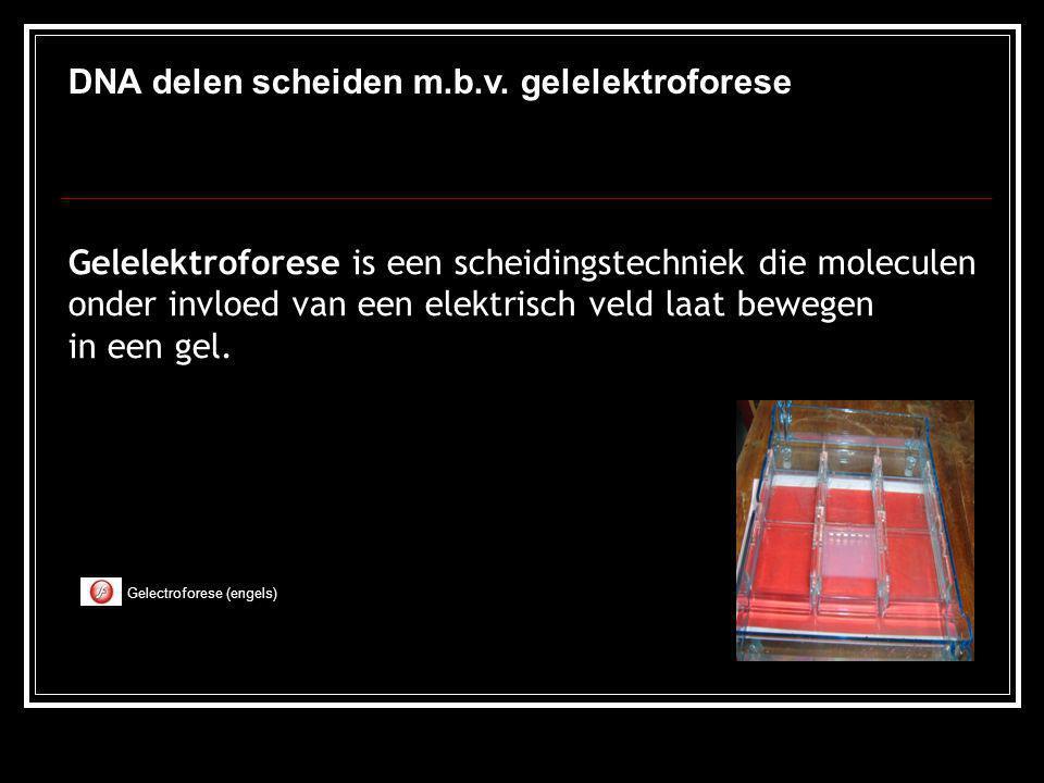 DNA delen scheiden m.b.v. gelelektroforese Gelelektroforese is een scheidingstechniek die moleculen onder invloed van een elektrisch veld laat bewegen