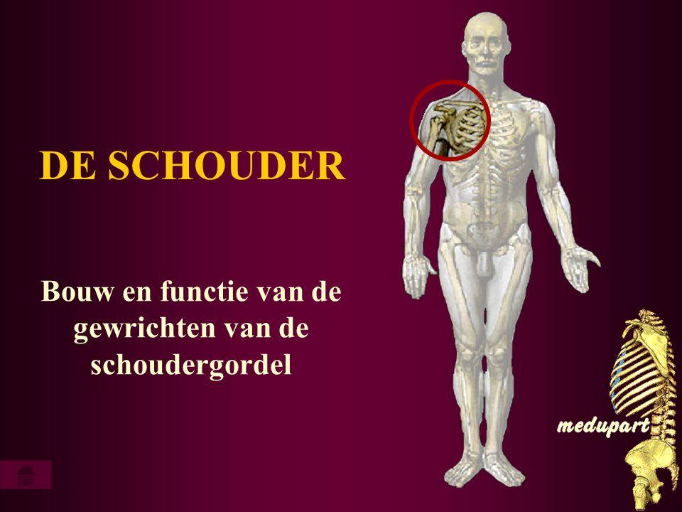 afvoeren (abductie) van humerus als voorbeeld scapulohumerale ritme..