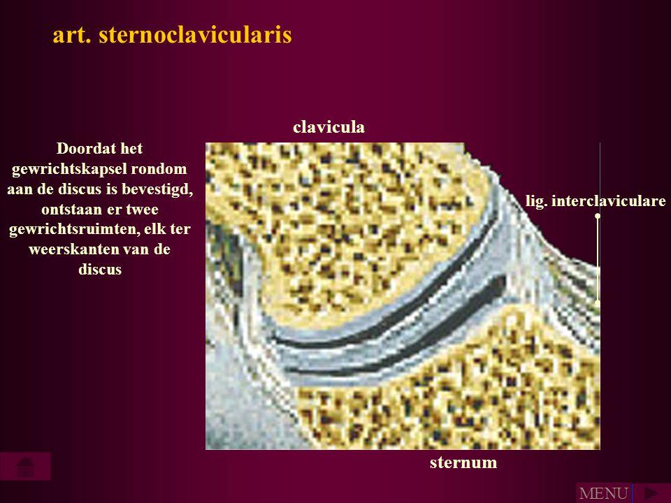 art. sternoclavicularis lig. interclaviculare sternum Doordat het gewrichtskapsel rondom aan de discus is bevestigd, ontstaan er twee gewrichtsruimten