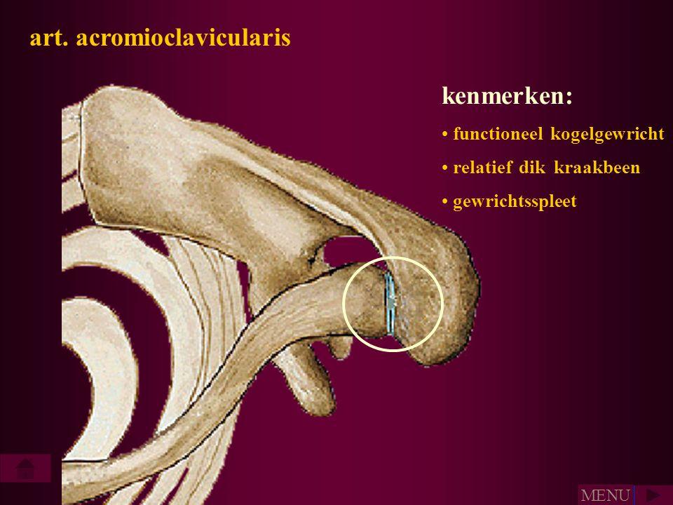 art. acromioclavicularis • functioneel kogelgewricht • relatief dik kraakbeen • gewrichtsspleet kenmerken: • MENU