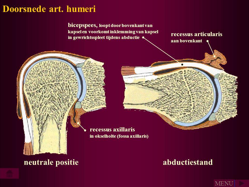 recessus articularis aan bovenkant recessus axillaris in okselholte (fossa axillaris) bicepspees, loopt door bovenkant van kapsel en voorkomt inklemmi