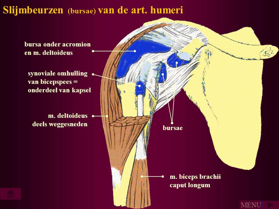 bursa onder acromion en m. deltoideus m. deltoideus deels weggesneden m. biceps brachii caput longum bursae synoviale omhulling van bicepspees = onder