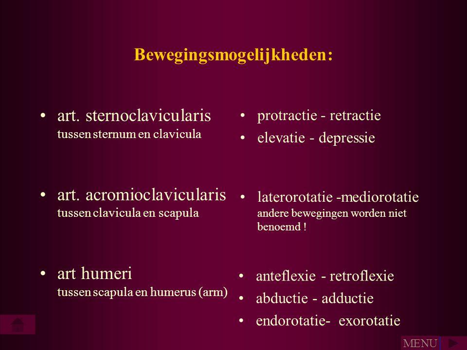 Bewegingsmogelijkheden: •art. sternoclavicularis tussen sternum en clavicula •art. acromioclavicularis tussen clavicula en scapula •art humeri tussen
