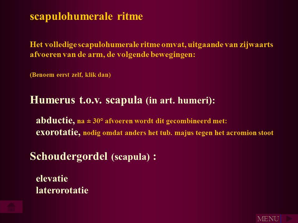 scapulohumerale ritme Het volledige scapulohumerale ritme omvat, uitgaande van zijwaarts afvoeren van de arm, de volgende bewegingen: (Benoem eerst ze