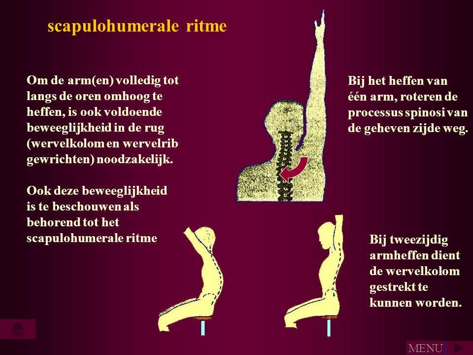 scapulohumerale ritme Om de arm(en) volledig tot langs de oren omhoog te heffen, is ook voldoende beweeglijkheid in de rug (wervelkolom en wervelrib g