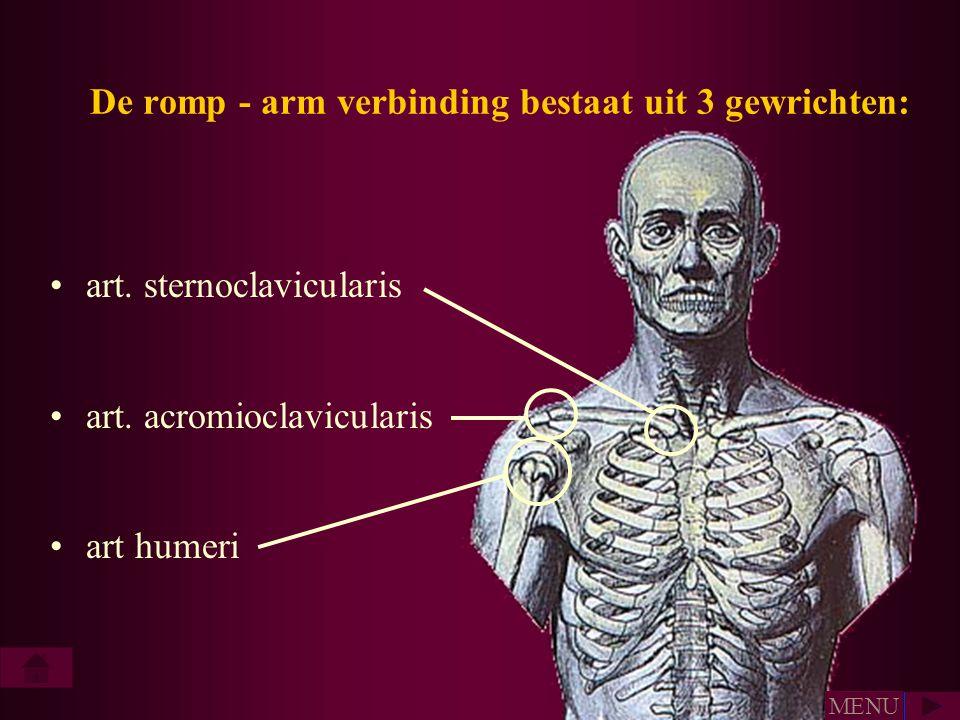 De romp - arm verbinding bestaat uit 3 gewrichten: •art. sternoclavicularis •art. acromioclavicularis •art humeri MENU