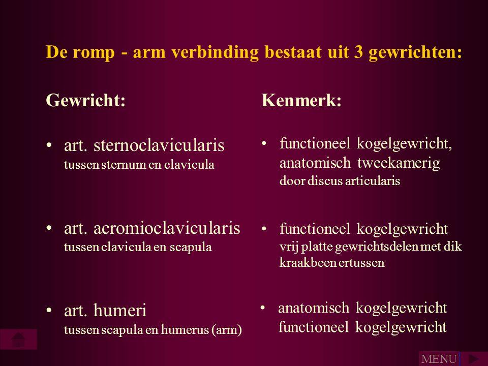 De romp - arm verbinding bestaat uit 3 gewrichten: •art. sternoclavicularis tussen sternum en clavicula •art. acromioclavicularis tussen clavicula en