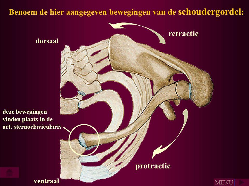 Benoem de hier aangegeven bewegingen van de schoudergordel : dorsaal ventraal retractie protractie deze bewegingen vinden plaats in de art. sternoclav