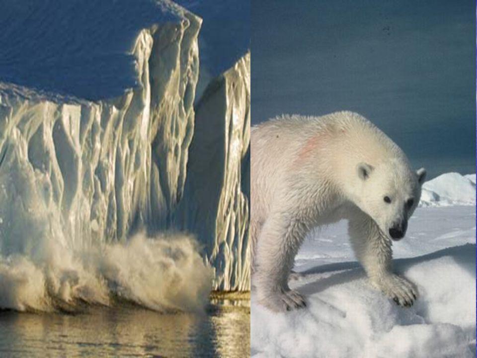 • Nederland loopt onder als Groenland smelt.• Niet als de Noordpool smelt.