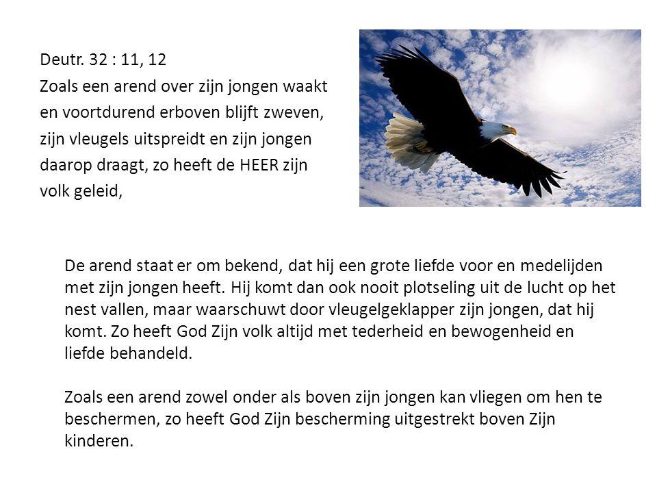 Deutr. 32 : 11, 12 Zoals een arend over zijn jongen waakt en voortdurend erboven blijft zweven, zijn vleugels uitspreidt en zijn jongen daarop draagt,