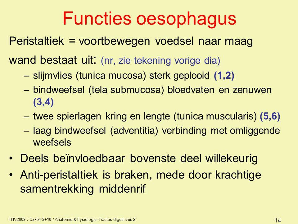 FHV2009 / Cxx54 9+10 / Anatomie & Fysiologie -Tractus digestivus 2 14 Functies oesophagus Peristaltiek = voortbewegen voedsel naar maag wand bestaat u