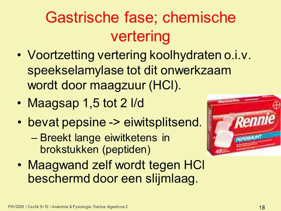 FHV2009 / Cxx54 9+10 / Anatomie & Fysiologie -Tractus digestivus 2 18 Gastrische fase; chemische vertering •Voortzetting vertering koolhydraten o.i.v.
