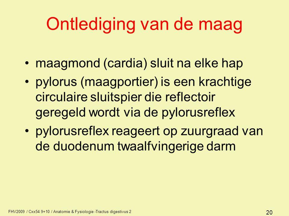 FHV2009 / Cxx54 9+10 / Anatomie & Fysiologie -Tractus digestivus 2 20 Ontlediging van de maag •maagmond (cardia) sluit na elke hap •pylorus (maagporti