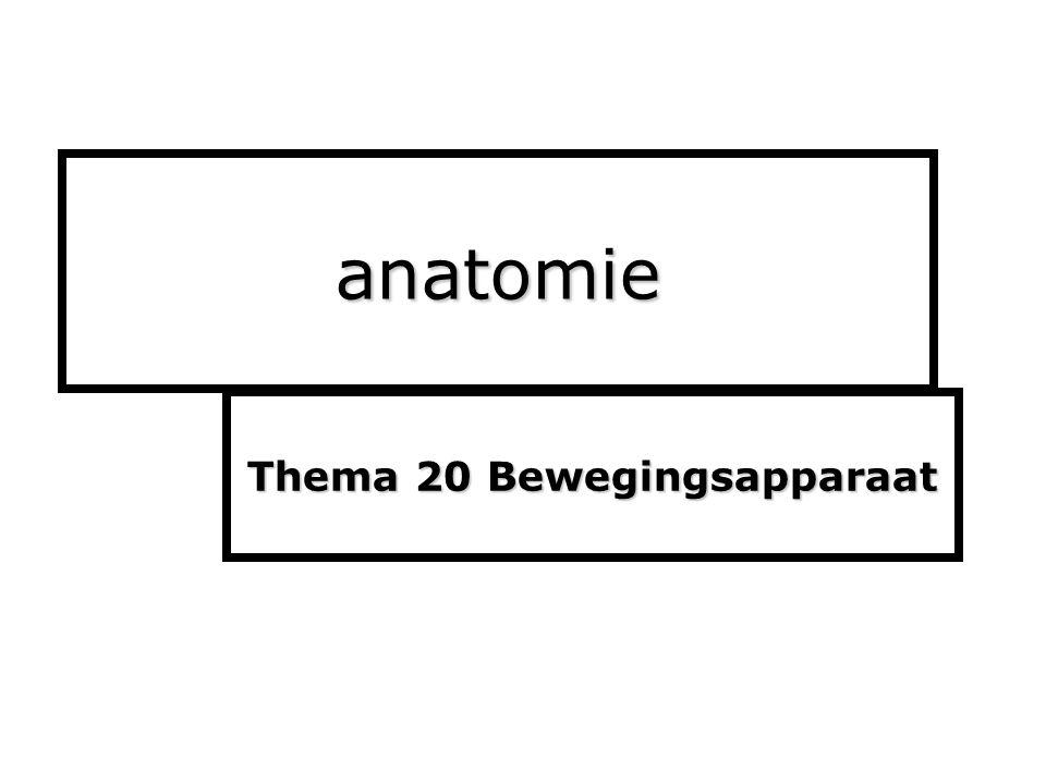 anatomie Thema 20 Bewegingsapparaat