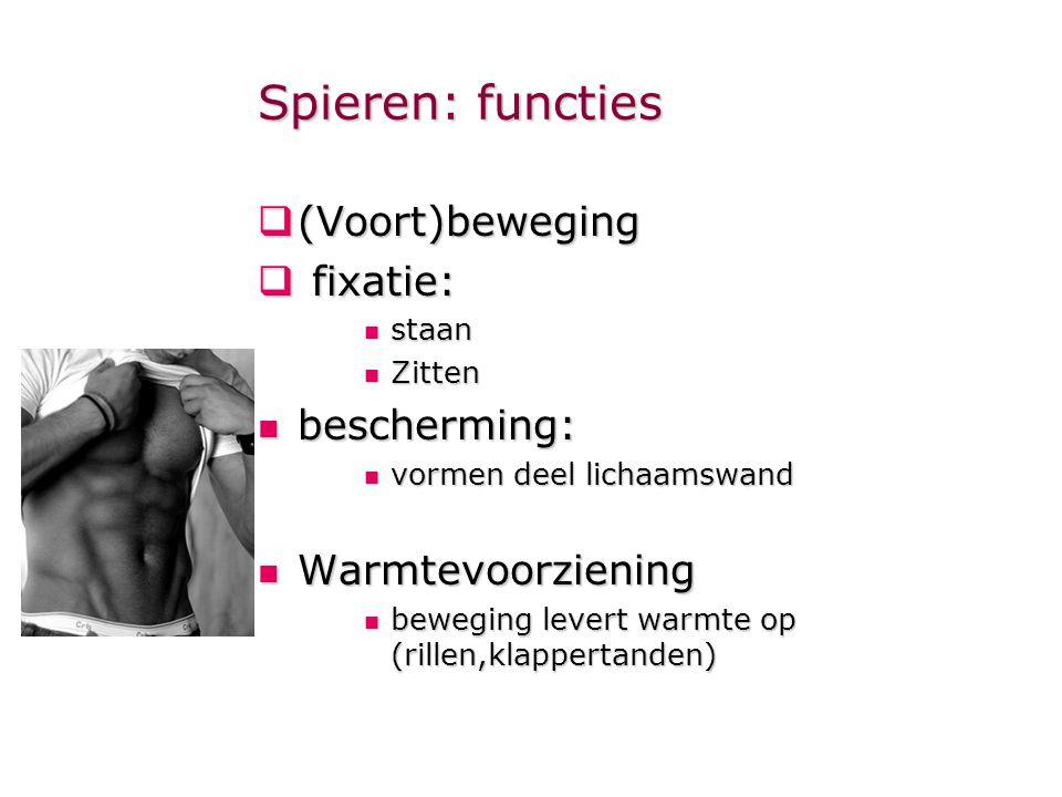 Spieren: functies  (Voort)beweging  fixatie:  staan  Zitten  bescherming:  vormen deel lichaamswand  Warmtevoorziening  beweging levert warmte