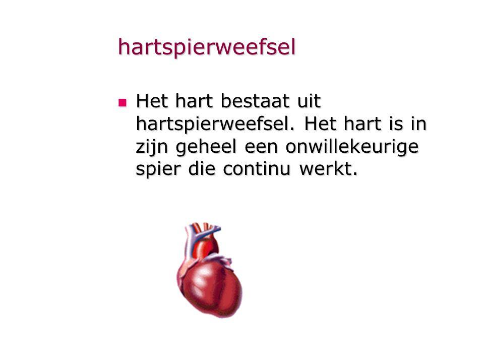 hartspierweefsel  Het hart bestaat uit hartspierweefsel. Het hart is in zijn geheel een onwillekeurige spier die continu werkt.