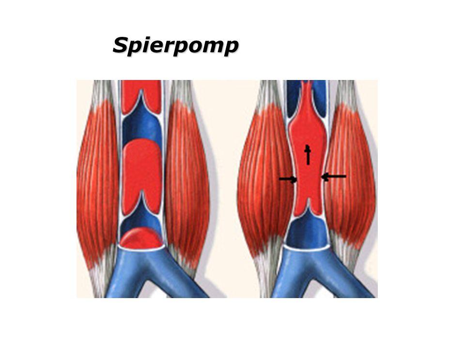 Spierpomp