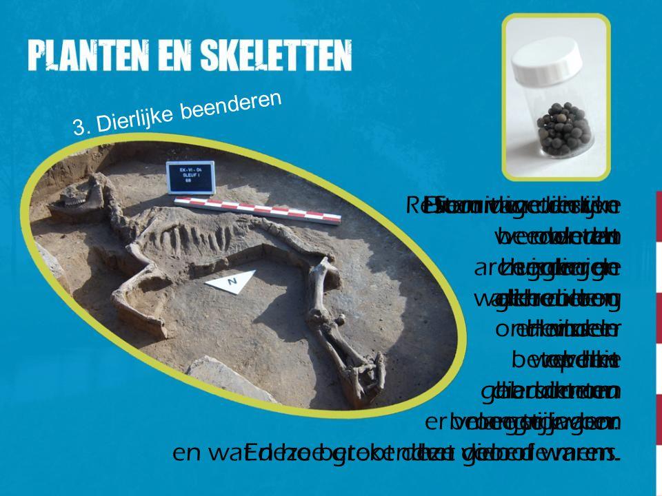 3. Dierlijke beenderen Sommige dieren werden als huisdieren gehouden. Honden werden gebruikt om mee te jagen. Resten van dierlijke beenderen zeggen de