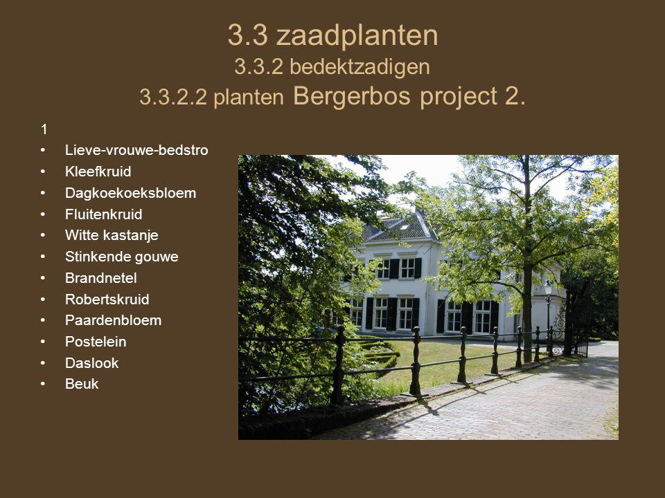 3.3 zaadplanten 3.3.2 bedektzadigen 3.3.2.2 planten Bergerbos project 2. 1 •Lieve-vrouwe-bedstro •Kleefkruid •Dagkoekoeksbloem •Fluitenkruid •Witte ka