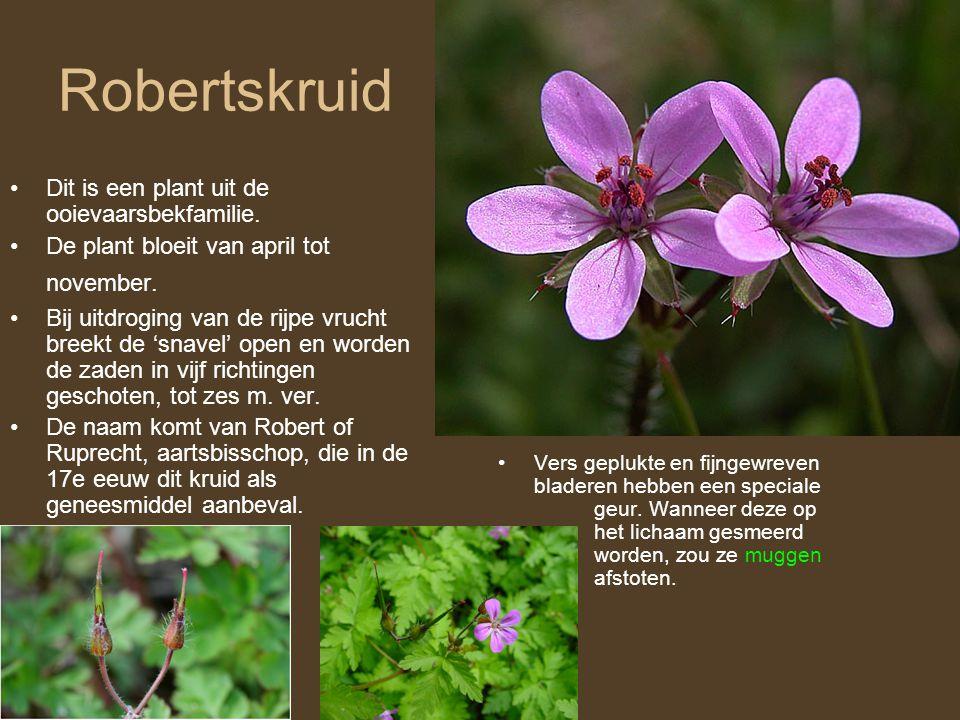 Robertskruid •Dit is een plant uit de ooievaarsbekfamilie. •De plant bloeit van april tot november. •Bij uitdroging van de rijpe vrucht breekt de 'sna