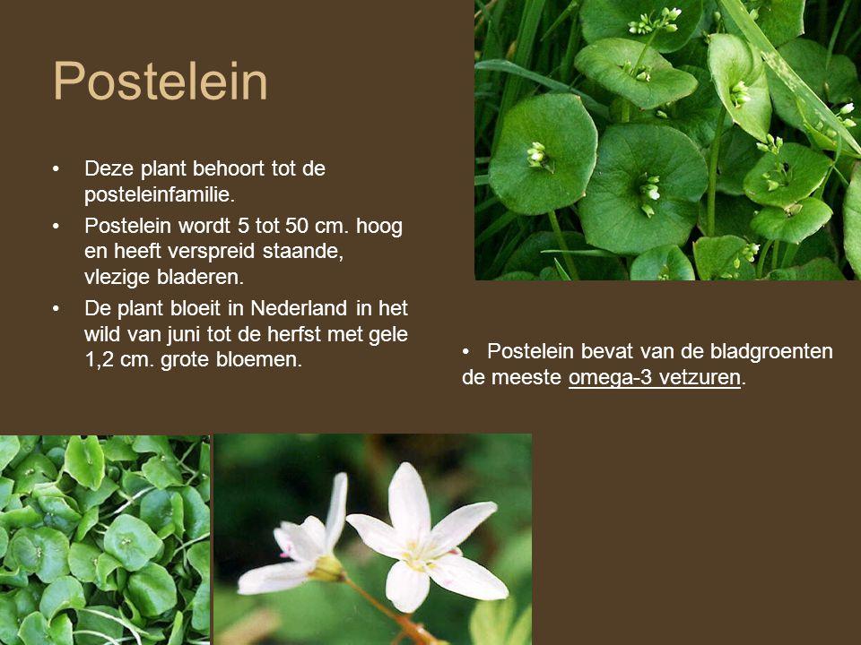 Postelein •Deze plant behoort tot de posteleinfamilie. •Postelein wordt 5 tot 50 cm. hoog en heeft verspreid staande, vlezige bladeren. •De plant bloe