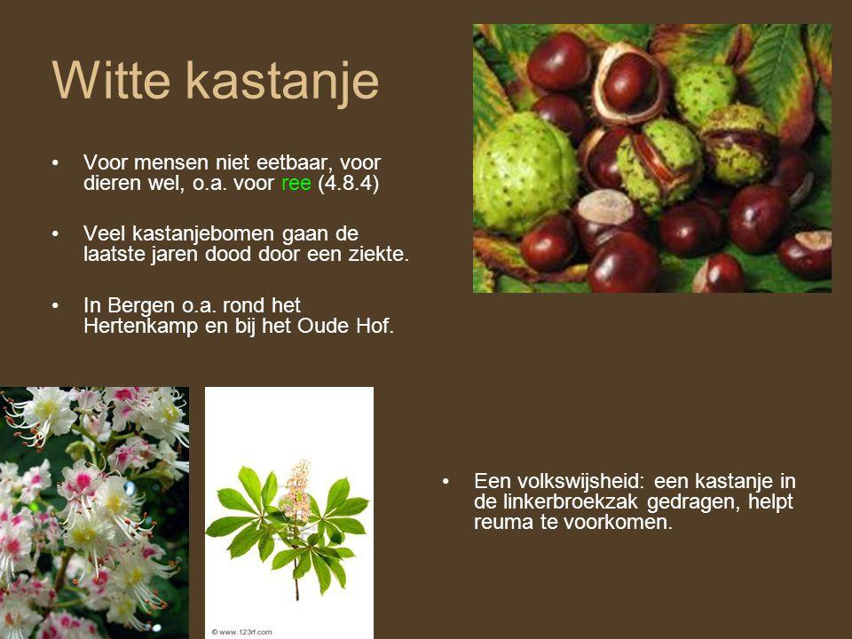 Witte kastanje •Voor mensen niet eetbaar, voor dieren wel, o.a. voor ree (4.8.4) •Veel kastanjebomen gaan de laatste jaren dood door een ziekte. •In B