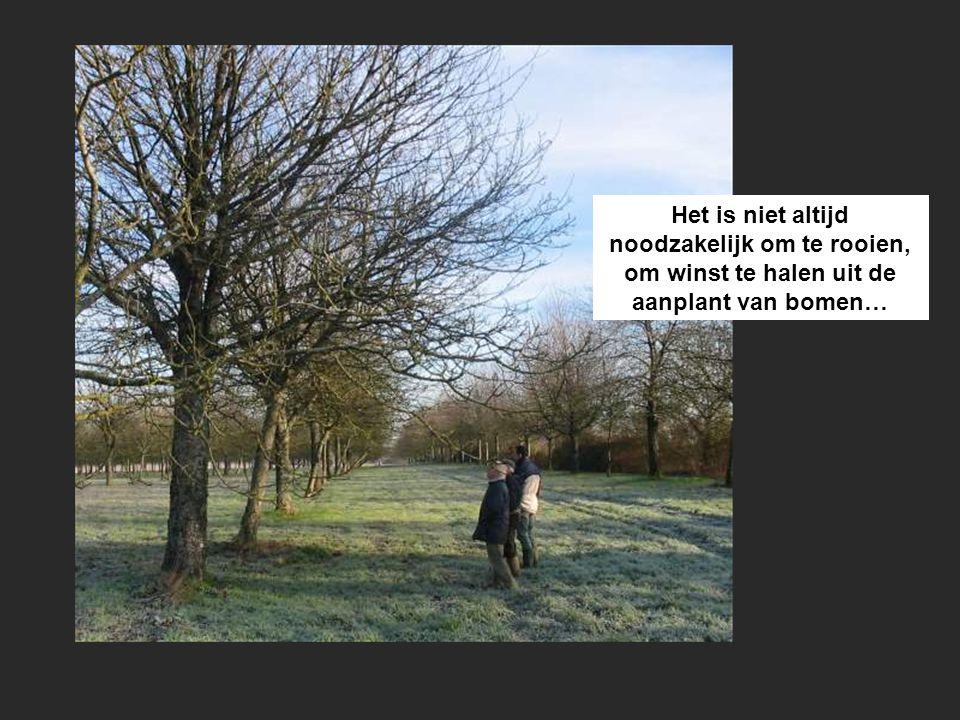 Het is niet altijd noodzakelijk om te rooien, om winst te halen uit de aanplant van bomen…