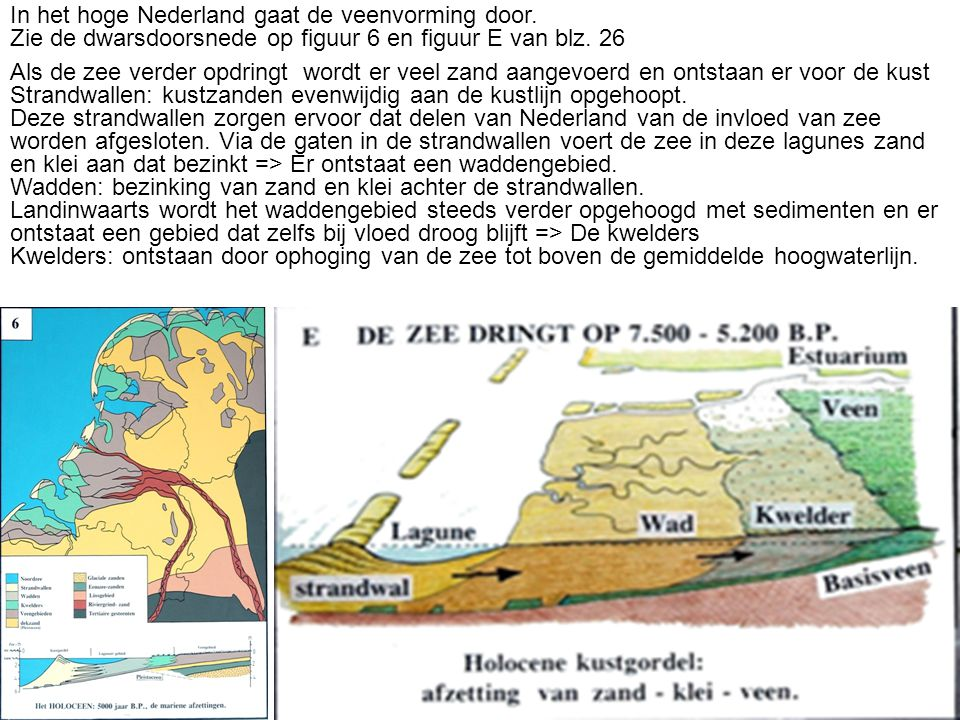In het hoge Nederland gaat de veenvorming door. Zie de dwarsdoorsnede op figuur 6 en figuur E van blz. 26 Als de zee verder opdringt wordt er veel zan