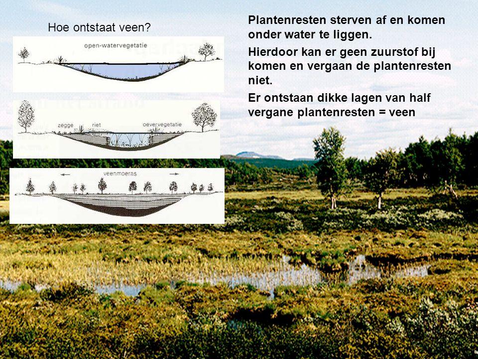 Plantenresten sterven af en komen onder water te liggen. Hierdoor kan er geen zuurstof bij komen en vergaan de plantenresten niet. Er ontstaan dikke l