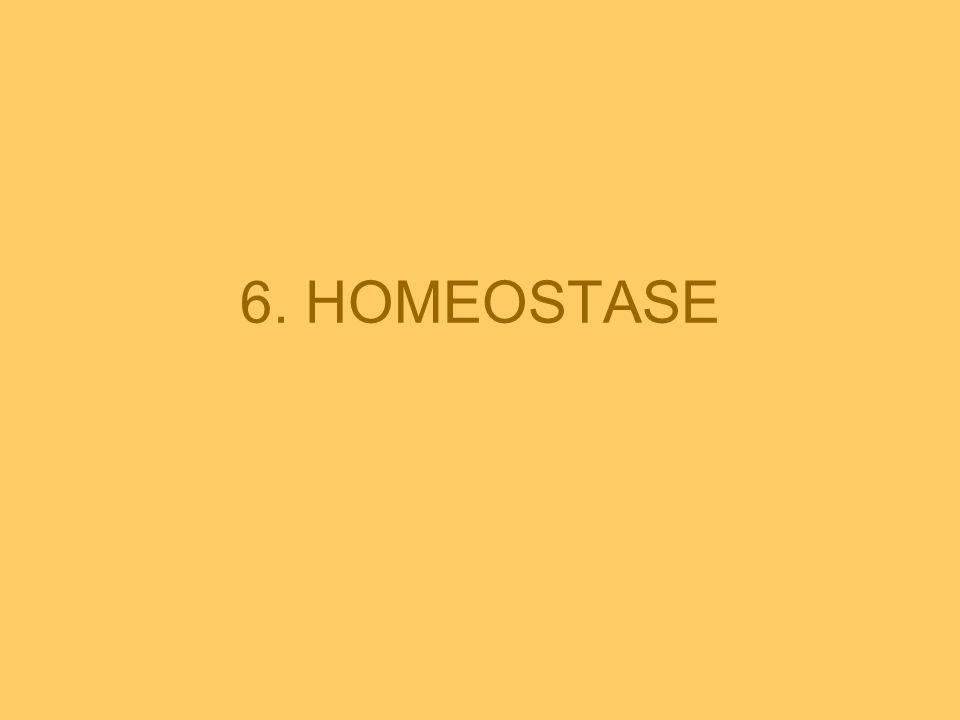 HET BEGRIP HOMEOSTASE •Intern milieu ◄► Extern milieu  bloed, lymfe, weefselvocht •Belangrijk om intern milieu zo constant mogelijk te houden = HOMEOSTASE (G.