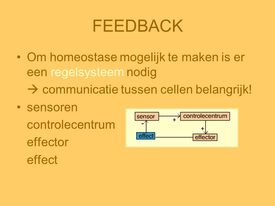 FEEDBACK •Om homeostase mogelijk te maken is er een regelsysteem nodig  communicatie tussen cellen belangrijk! •sensoren controlecentrum effector eff