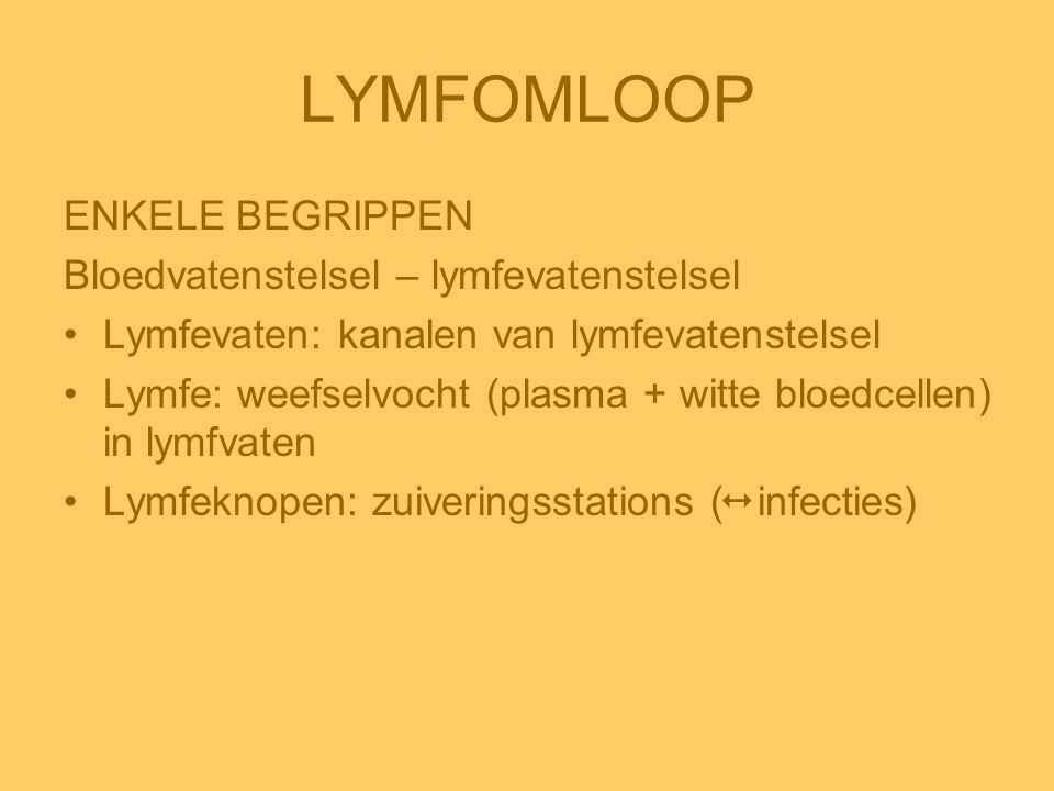 LYMFOMLOOP ENKELE BEGRIPPEN Bloedvatenstelsel – lymfevatenstelsel •Lymfevaten: kanalen van lymfevatenstelsel •Lymfe: weefselvocht (plasma + witte bloe