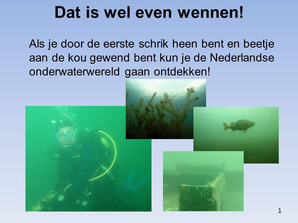 Dat is wel even wennen! Als je door de eerste schrik heen bent en beetje aan de kou gewend bent kun je de Nederlandse onderwaterwereld gaan ontdekken!